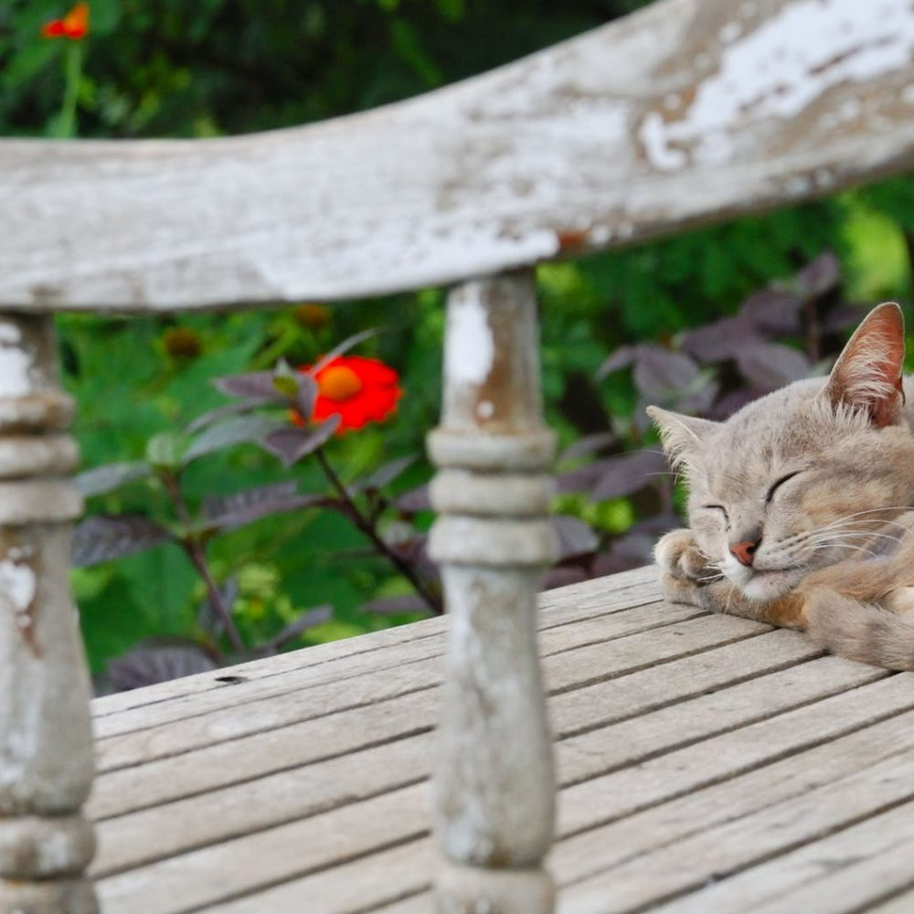 Katten i baghaven