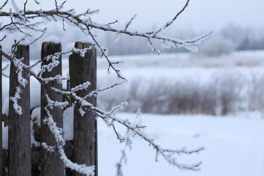 Vinteren bliver ved
